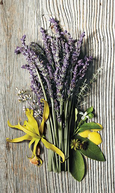 aveda-lavender